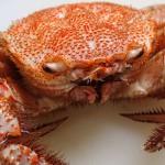 オヤジたちの道楽で、正しいアフィリエイトを目指す、カニ(蟹)の総合情報サイトを創ってみました。